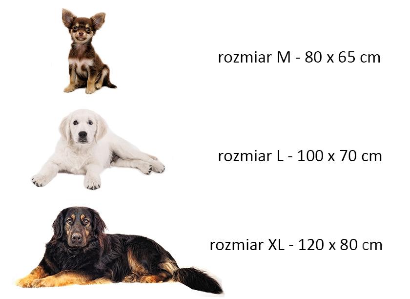Porównanie rozmiarów psów podczas wyboru legowiska.